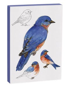Eastern Bluebird 5x7 Canvas