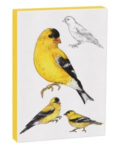 American Goldfinch 5x7 Canvas