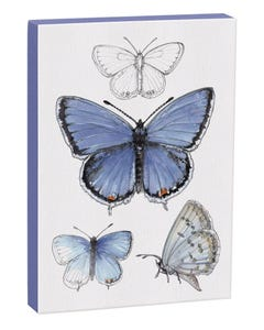 Eastern Tailed-Blue Butterfly 5x7 Canvas