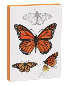 Monarch Butterfly 5x7 Canvas